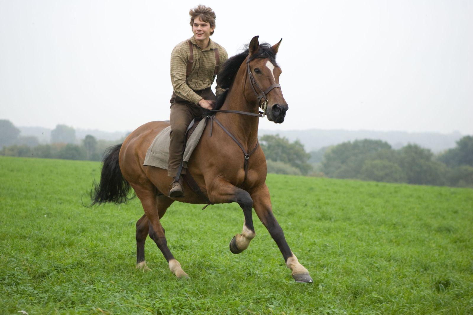 http://popculturenerd.com/wp-content/uploads/2011/12/war-horse-andrew-cooper.jpg