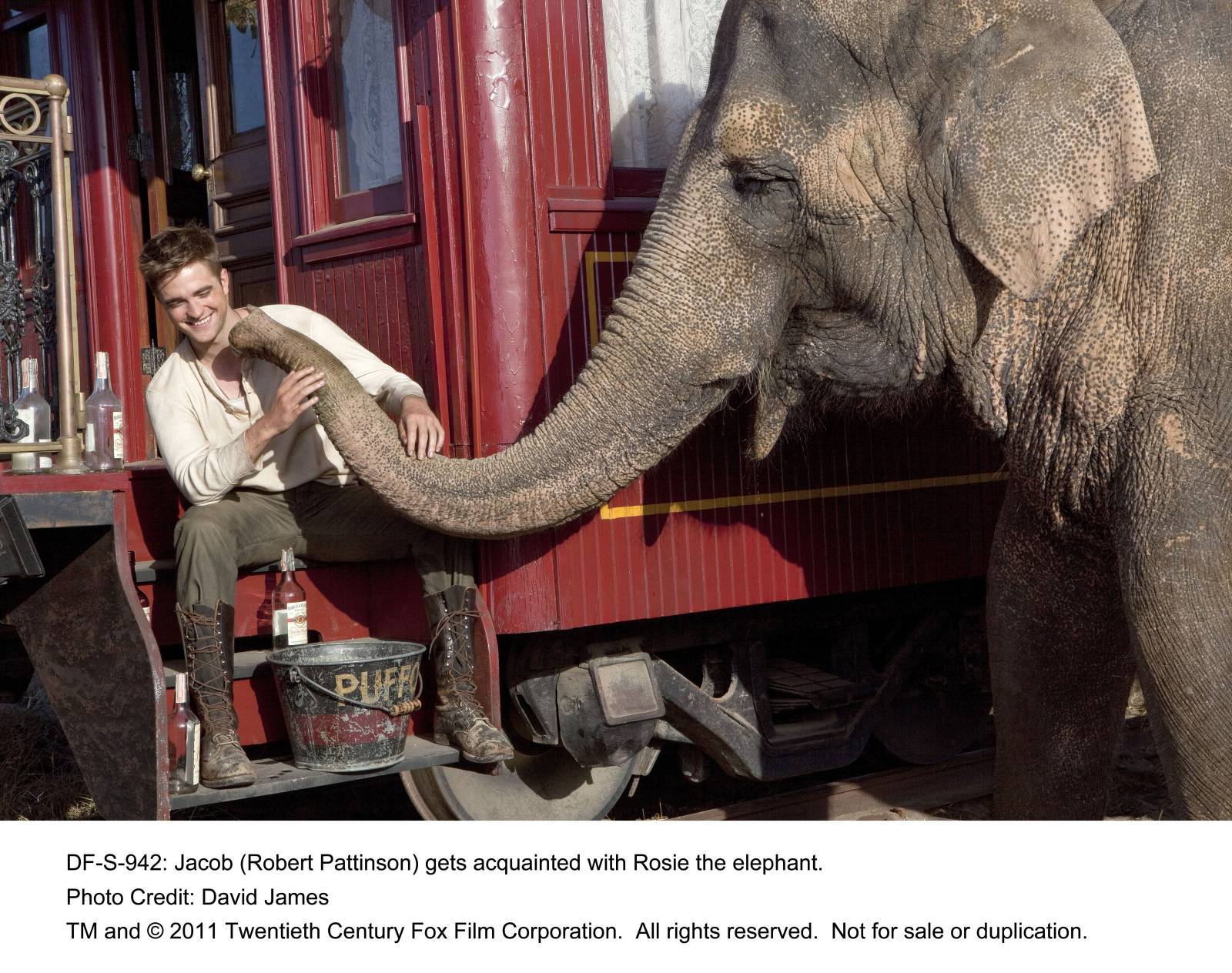 water for elephants by sara gruen essay Water for elephants the novel water for elephants is written by the best-selling author sarah gruen the book was published on may 26, 2006, under algonquin books, in the united states of america.