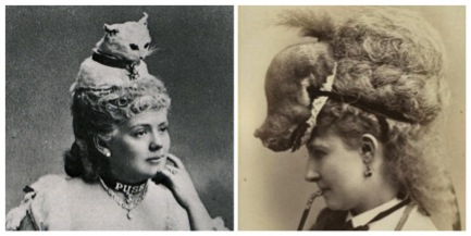 cats-on-heads