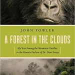 forest in clouds